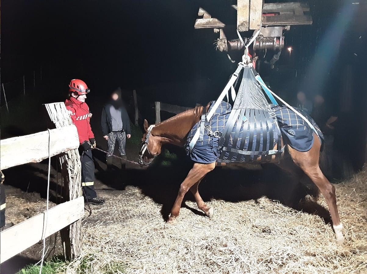 23_LIK_záchrana koně_zvíře v záchranné síti_u něj stojí veterinářka a v pozadí majitelé.jpg