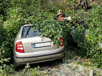 spadly-strom-na-auto.jpg